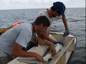 FSUCML graduate students Cheston Peterson (right) and Brendan Talwar (left), taking measurements and samples