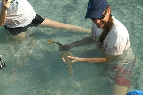 Dr. Dean Grubbs holds sawfish pup right after its birth