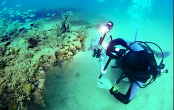 Figure 2. Divers surveying corals and sponges off Dog Island.