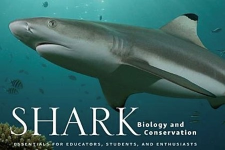 Shark Bio And Conserv